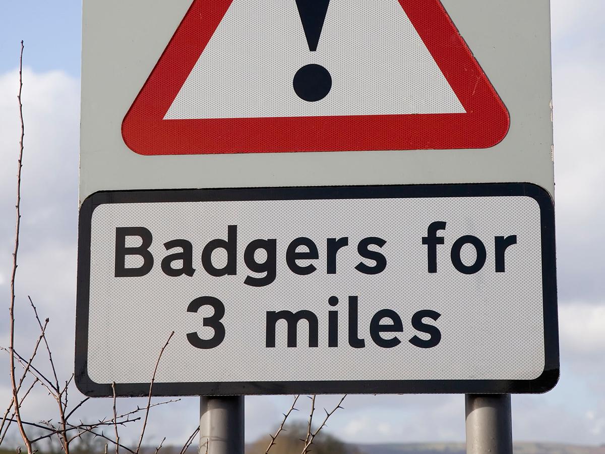 Badger signage