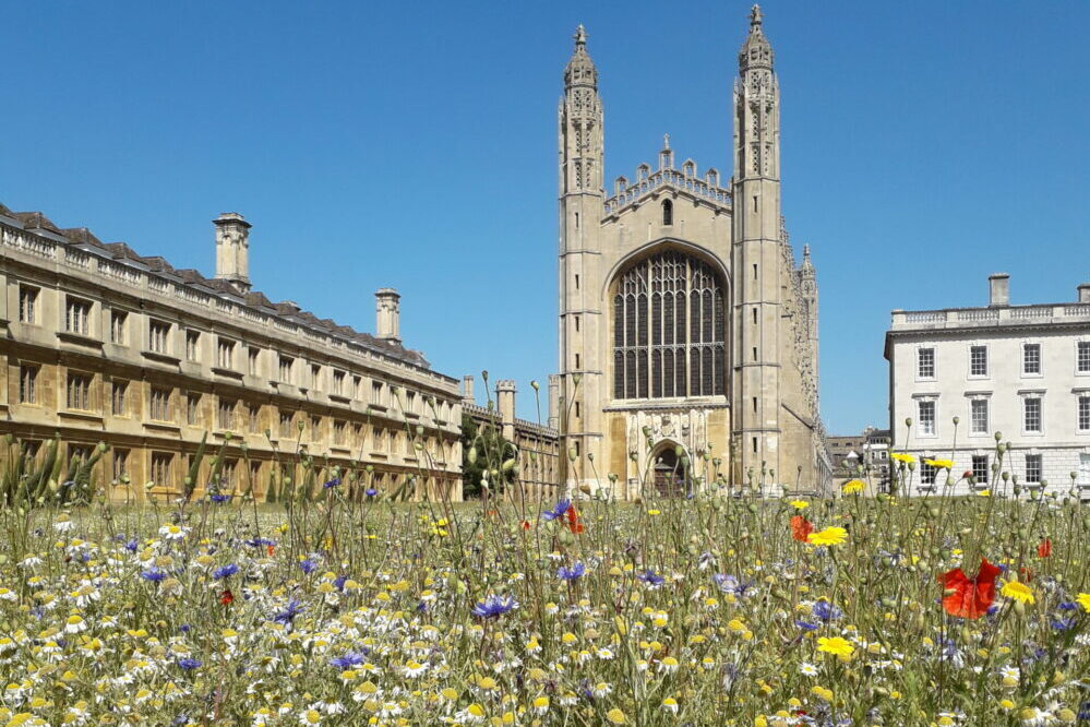 Kings College meadow in full bloom